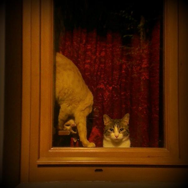 italian-cat1.jpg