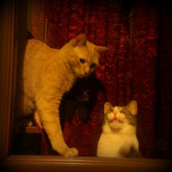 italian-cat2.jpg