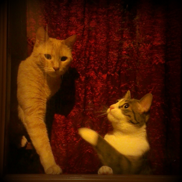 italian-cat5.jpg