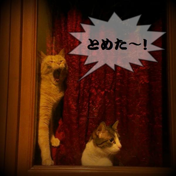 italian-cat8