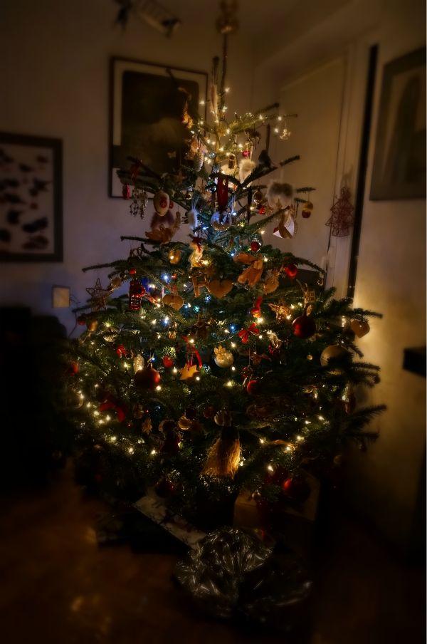 poland-christmas13.jpg