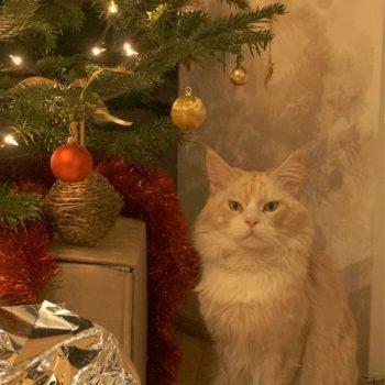 ポーランドのクリスマス(2)クリスマスツリーの飾りつけ(Christmas in Poland-2)