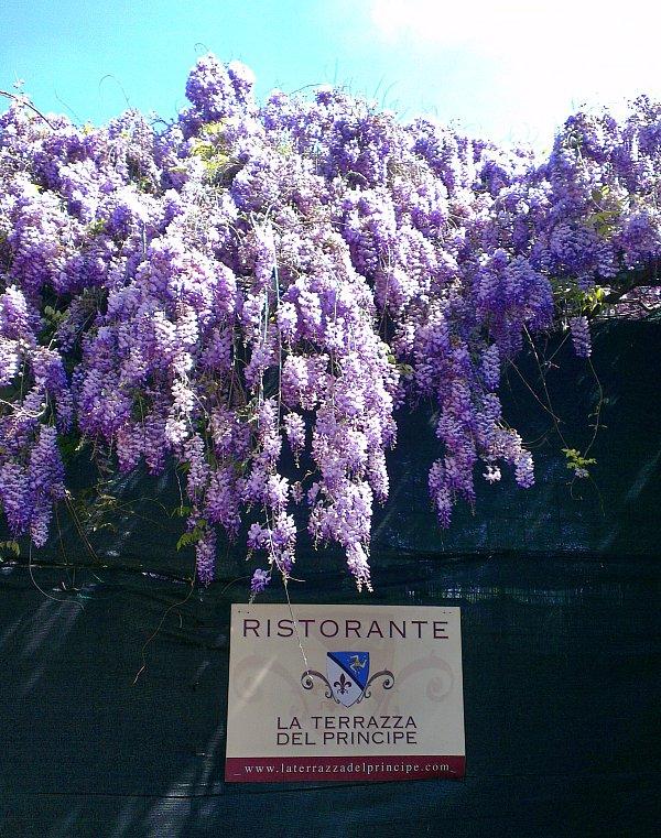 fiori viola-1