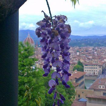 イタリアは花盛りです。