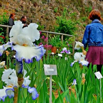 5月お勧めのフィレンツェ観光スポット(2)アイリス・ガーデン
