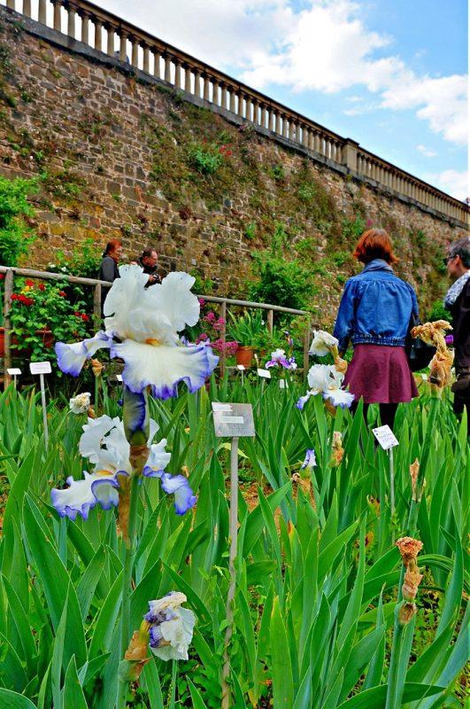 iris-garden3