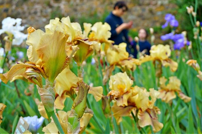 iris-garden7-700