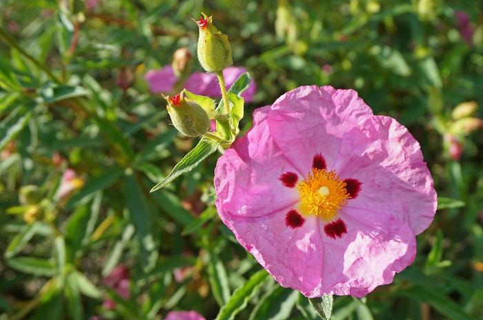 rose-garden18-700