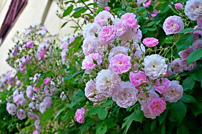 rose-garden19-700