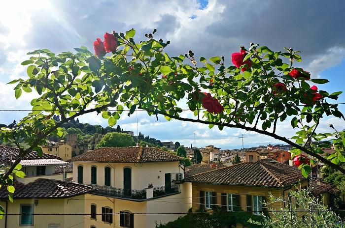 rose-garden2-700