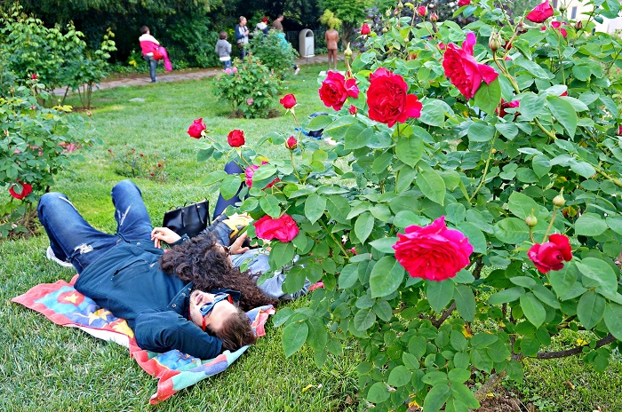 rose-garden9-700
