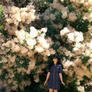 メディチ家のヴィッラで見つけたかわいい木
