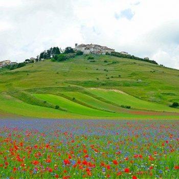 イタリア中部地震、カステルッチョ・ディ・ノルチャは「天空の花畑」で有名な観光地