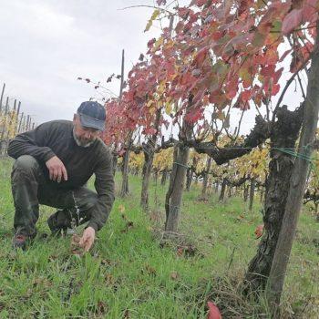 【全世界で2〜3%?!こだわり自然農法のワインづくり】宅ふぁいる便コラム連載