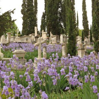 絵画のモデルにもなったフィレンツェの美しい「イギリス人墓地」