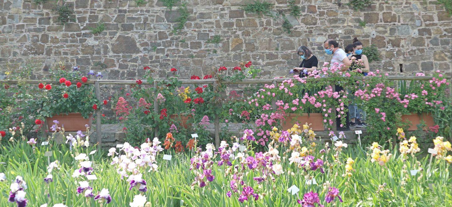 フィレンツェのアイリス庭園1